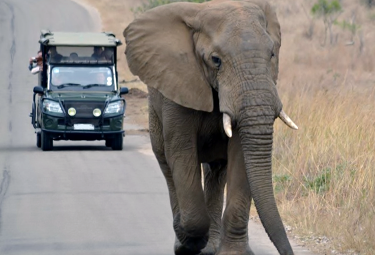 Addo Elephant Park Game Drive - Elephant on the Road
